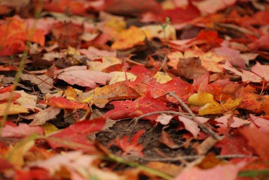 Toronto Botanical Garden: fall leaves