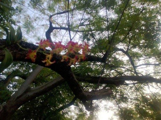 bunga anggrek yg mempertegas alam yg indah picture of
