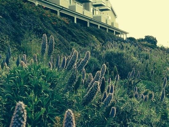 Beach House at Half Moon Bay: on the trail behind the hotel