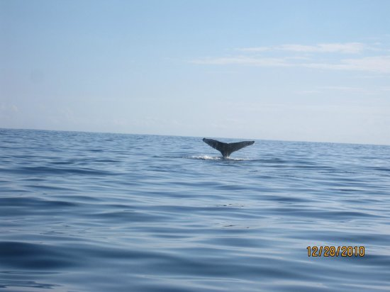 El Delfin Blanco : Whale Watching