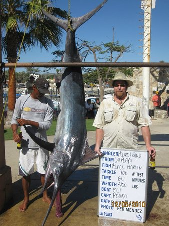 El Delfin Blanco : Black Marlin