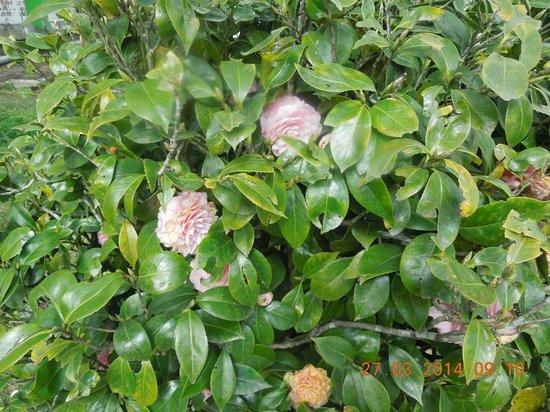 Darjeeling - Khush Alaya, A Sterling Holidays Resort: Flowers at Resort