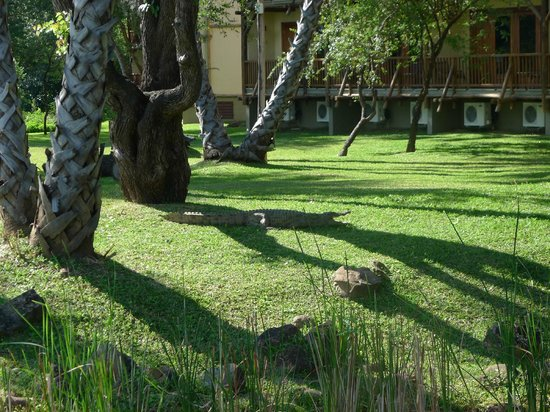 The David Livingstone Safari Lodge & Spa: Charlie the croc