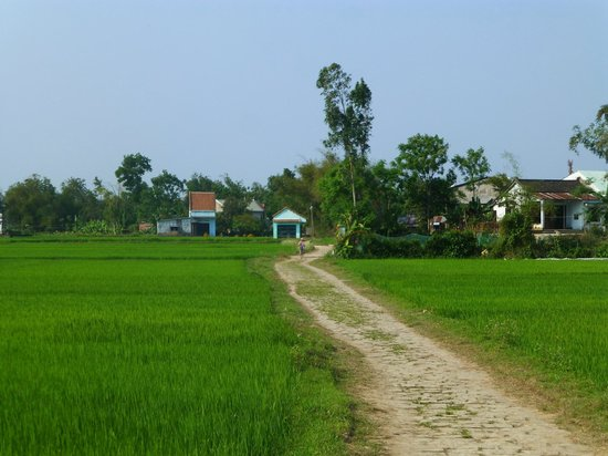 Hoi An Motorbike Adventures: The road took us through the vibrant green rice fields.