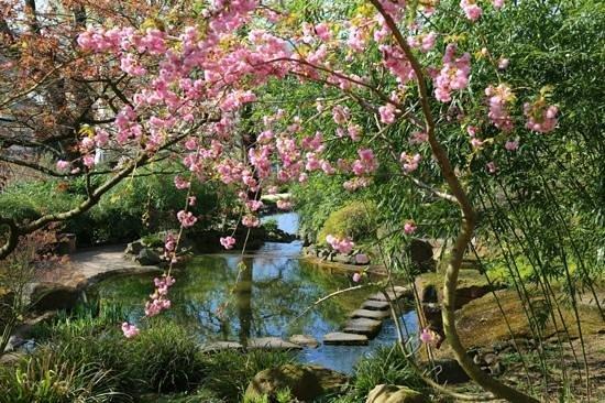 Japanischer Garten (Japanese Garden) : Flora