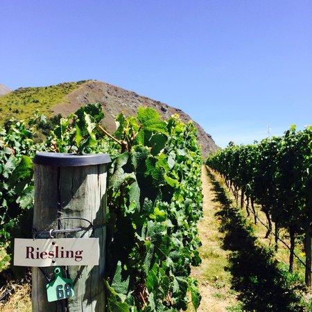 Gibbston Valley Wines: The vineyard