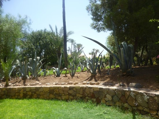 Hotel Riu Tikida Garden: plants