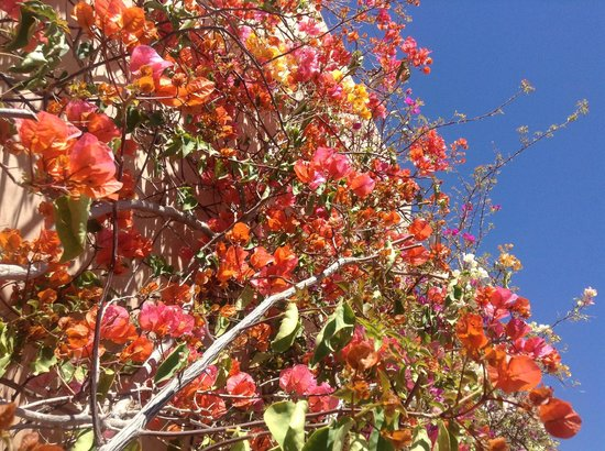 Les Jardins de la Medina: Explosion de couleurs