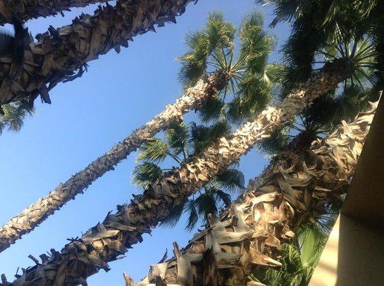 Les Jardins de la Medina: Palmiers géants.