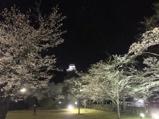 Meitetsu Inuyama Hotel : 夜桜満開の敷地内より犬山城を望む