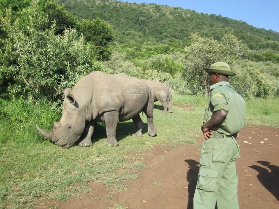 Fairmont Mara Safari Club: Visit to a white Rhino Sanctuary