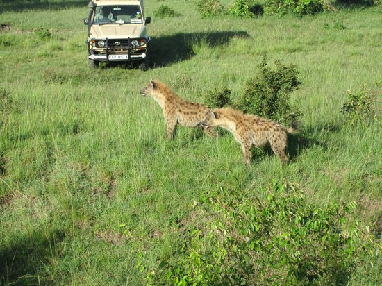 Fairmont Mara Safari Club: Up and Close