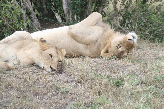 Oloi Karere Mara Camp: Gattoni
