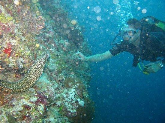 Taj Exotica Resort & Spa: Morena at Maldives