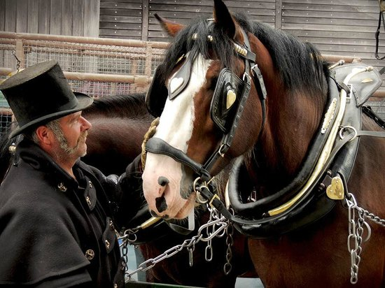 The Lizard Stallions Shire Experience Days: See us at popular Cornish events all year round