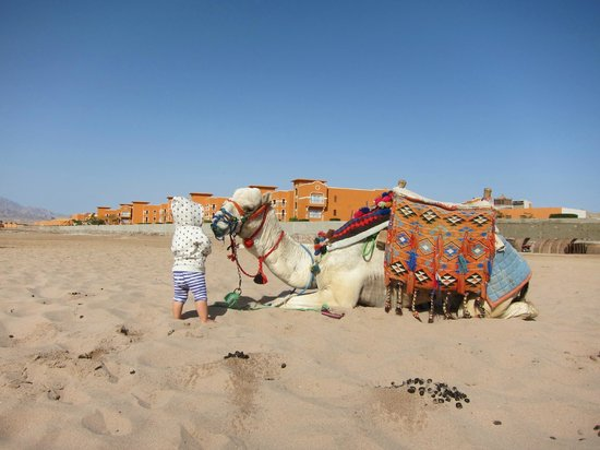 Caribbean World Resorts Soma Bay: за территорией отеля, прокат верблюдов