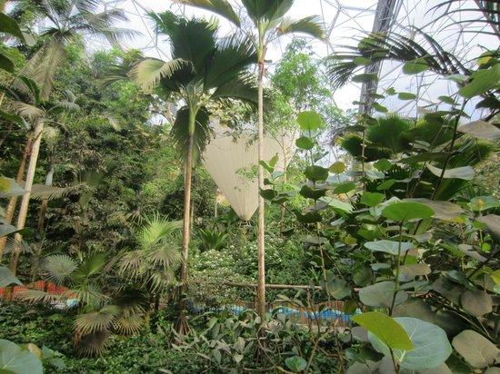 Eden Project: Inside the Rainforest Biome