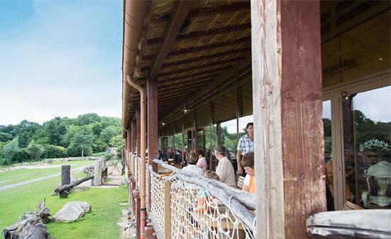KIWARA Lodge: Blick auf KIWARA Savanne