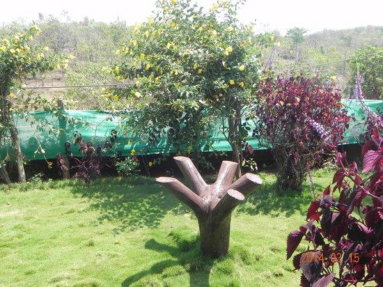 Rainbow's Kokan Pride Resort : The garden near Restaurant
