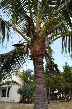 L'Escapade Island Resort : palms galore paradise island.. illot maitre