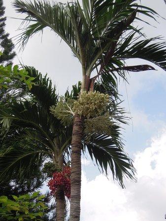 Samui Beach Resort: trees of the resort