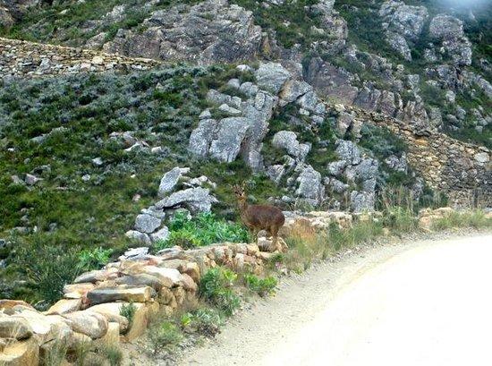 Swartberg Pass: My road!