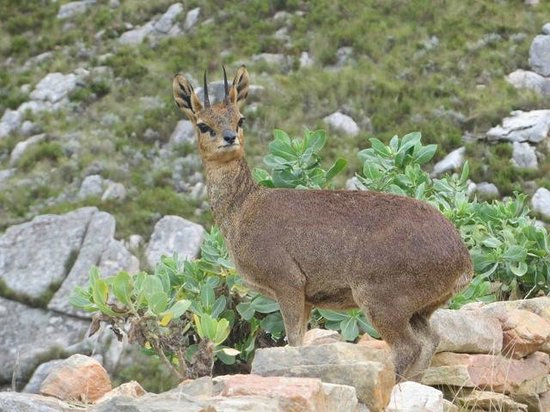 Swartberg Pass: Close up