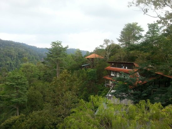 Awanmulan : room amidst the rainforest