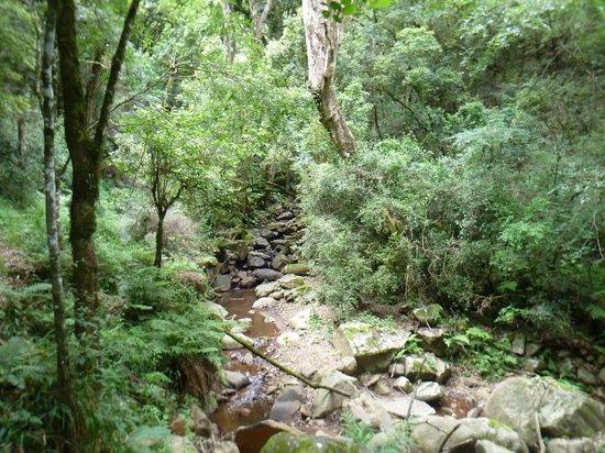 Drakensberg Sun Resort: Fern Forest