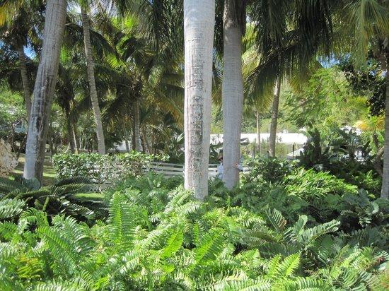Club Seabourne: garden