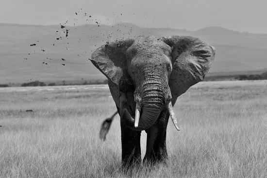 Porini Amboseli Camp: Dusting down