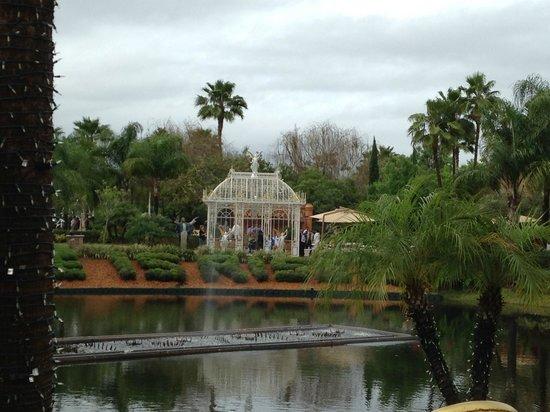 Holy Land Experience: garden