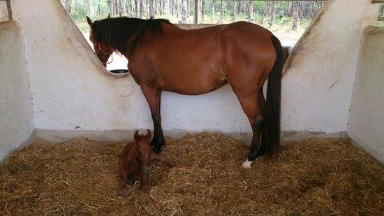 Khaolak Horse Club