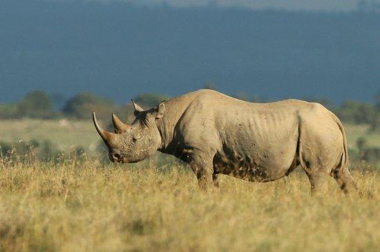 Porini Rhino Camp: Correctly named camp!