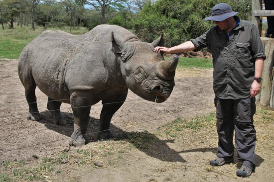 Porini Rhino Camp: Meeting Baraka the bkind rhino