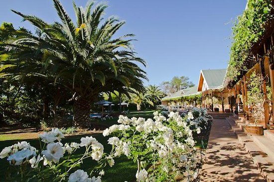 Hlangana Lodge: Stunning roses from your room