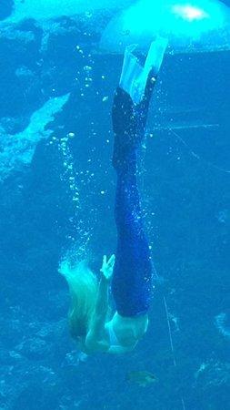 Weeki Wachee Springs : Under the Sea