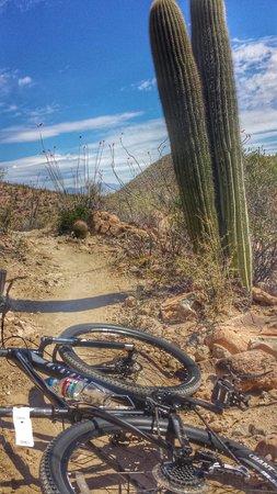 JW Marriott Tucson Starr Pass Resort & Spa: Mountain bike rental with PNUT AWESOME