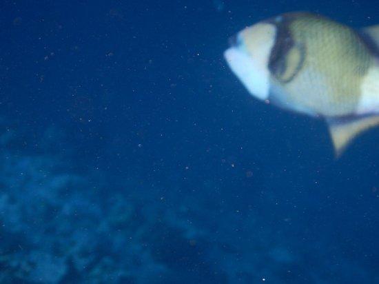 Ellaidhoo Maldives by Cinnamon: Uh oh Trig.....