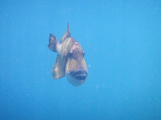 Ellaidhoo Maldives by Cinnamon: Swim away quickly!!