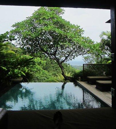 The Damai: infinity pool