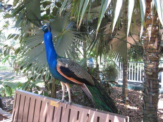 Flamingo Gardens: Loved Posing!