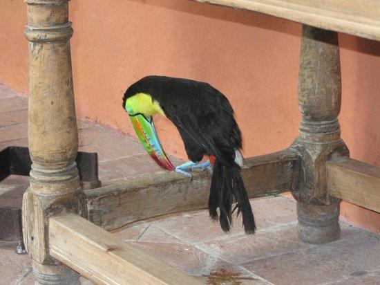 Sofitel Legend Santa Clara : Aprecie tucanos no hotel!