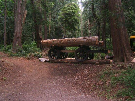 Willingdon Beach Trail : logging machine