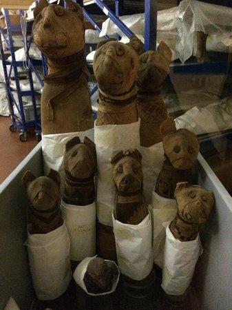 Musée égyptologique de Turin : мумифицированные животные