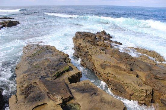 La Jolla Cove : Seals !