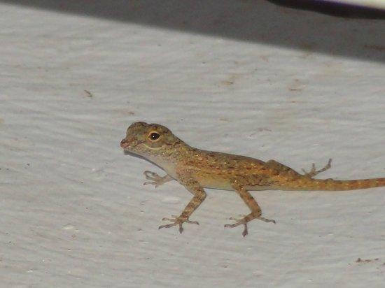 "Grand Palladium Bavaro Suites Resort & Spa: Little gecko or lizard on patio (probably 4"" long)"