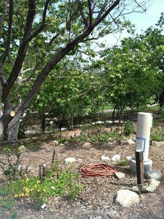 Conejo Valley Botanic Garden: Tranquility