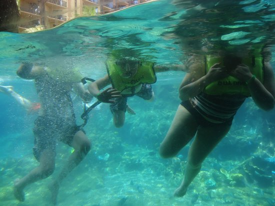 Aulani, a Disney Resort & Spa : snorkeling