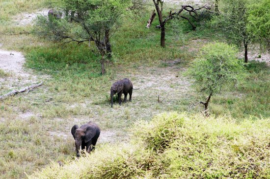 Tarangire Safari Lodge: Elephants below our room